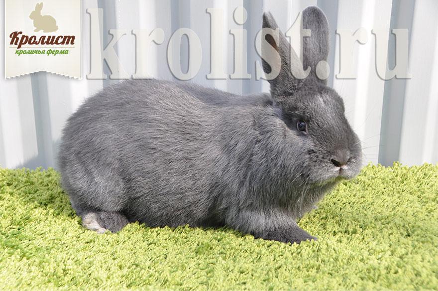 Породы Кроликов Фото И Описание