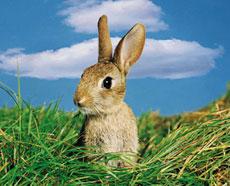 Как сделать ясли для кроликов своими руками 13